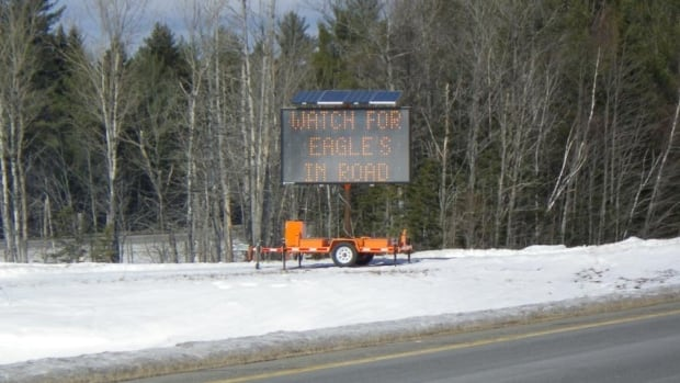 The State of Maine has installed eagle warning signs in the media of the I-95 highway in the Medway area.