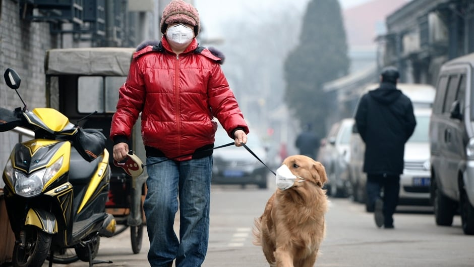 """A man and his dog, both wearing masks, walk along a small alley on a hazy day in Beijing. China's capital raised its four-tiered alert system to """"orange"""" for the first time on February 20, 2015."""