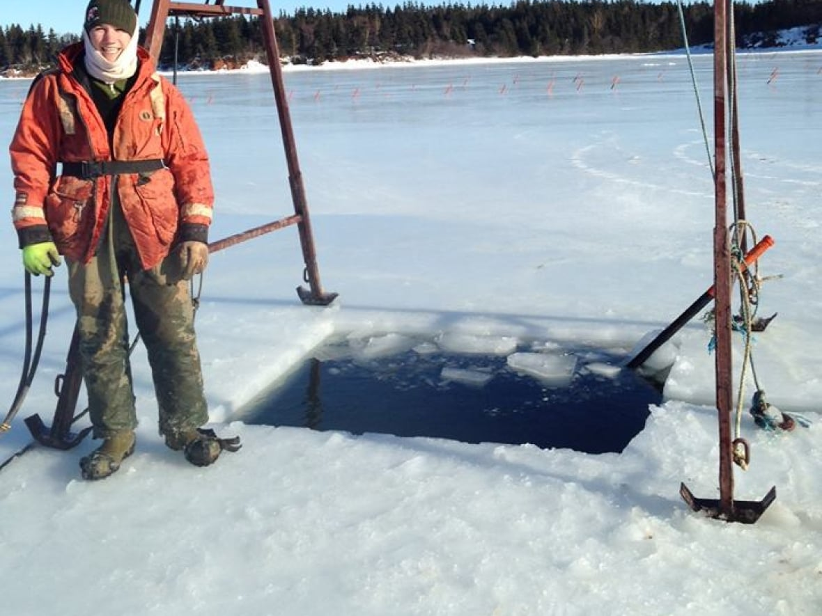 Harvesting oysters in winter an icy job for divers   CBC News