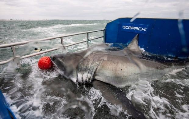 Shark Tracker 20150306