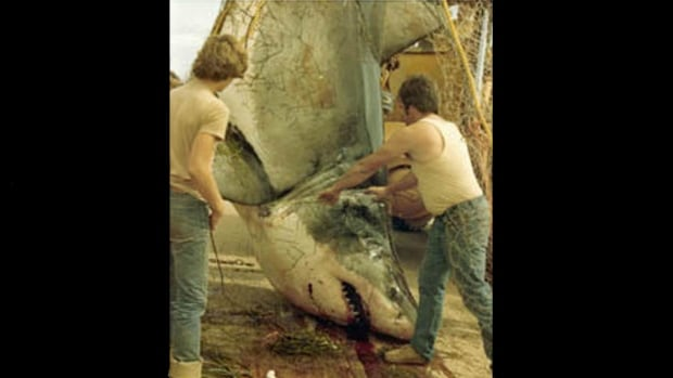 The famous P.E.I. great white shark was caught by David McKendrick of Alberton, P.E.I. in 1983.
