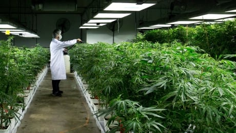 YEAR Marijuana What Next 20141222