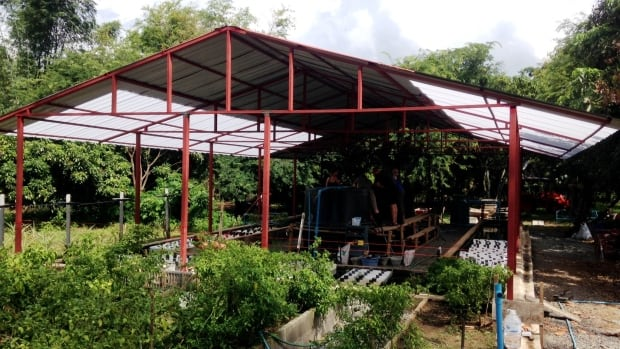 A fish farm at an orphanage in Thailand built by the Fly Fishing Collaborative to provide  food, income, water, and fresh produce.