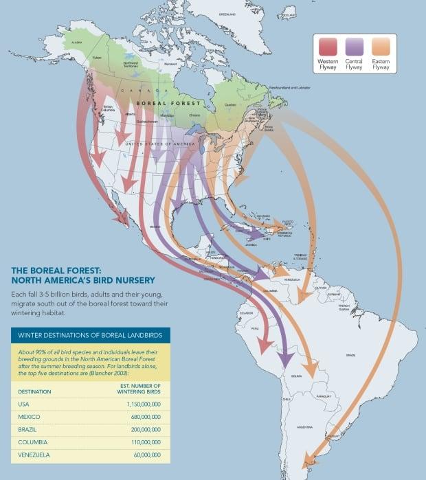 North America's Bird Nursery