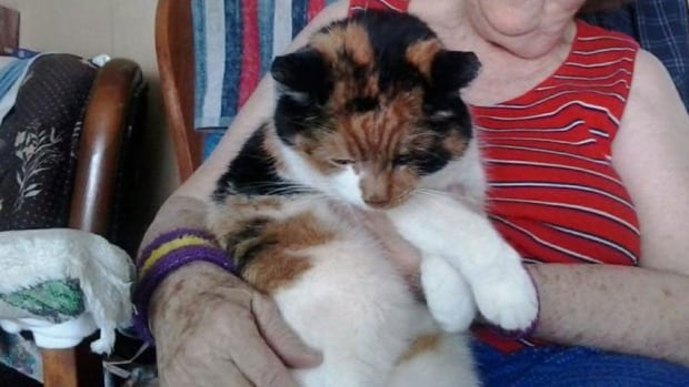 Bubba the cat went missing for 40 days before being discovered under her owners' snow-covered deck.