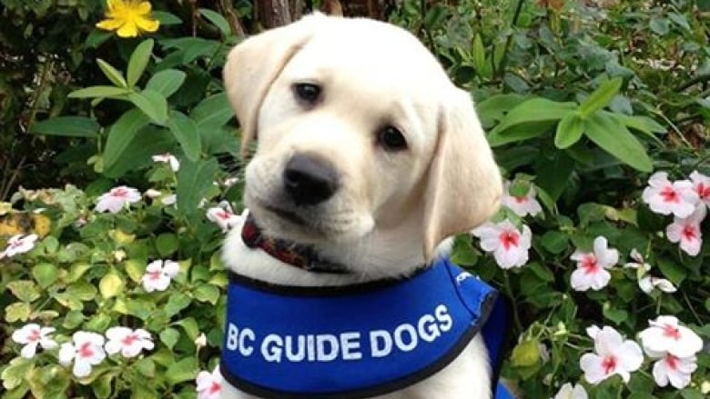 Guide Dog and Service Dog Act changes target fraudulent