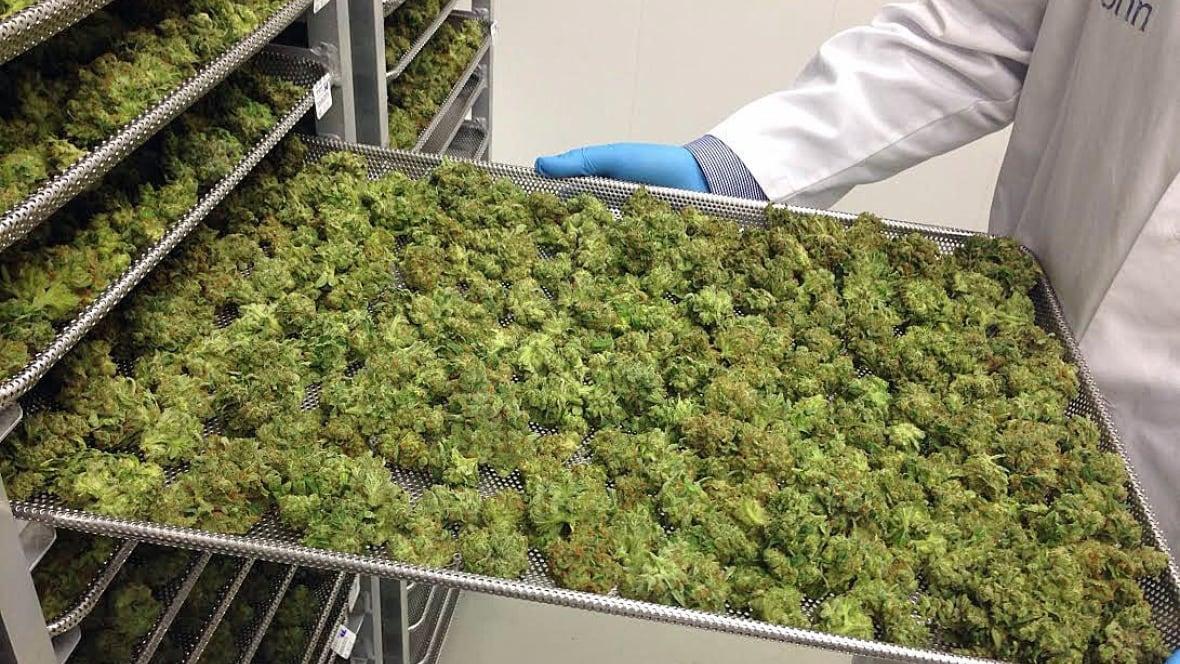 tilray medical marijuana producer brings in big bucks. Black Bedroom Furniture Sets. Home Design Ideas