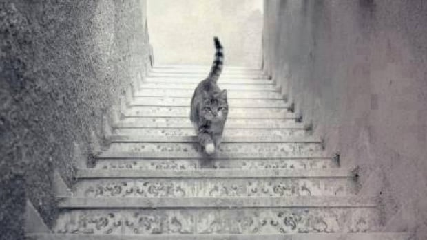 The internet is debating whether this cat is going up the stairs or down. Seriously.