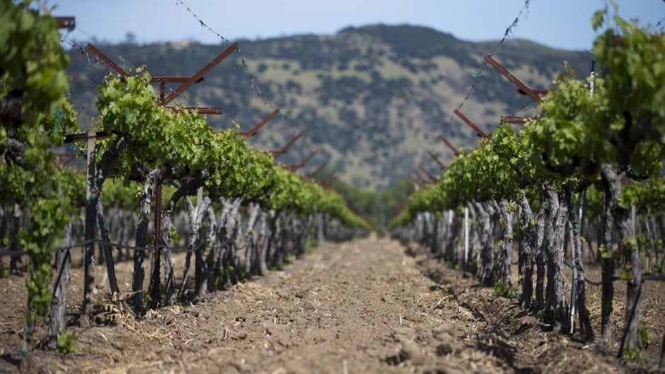 As the drought grinds on in California, the state's getting serious about conserving water and must make major shifts in water usage and agriculture.
