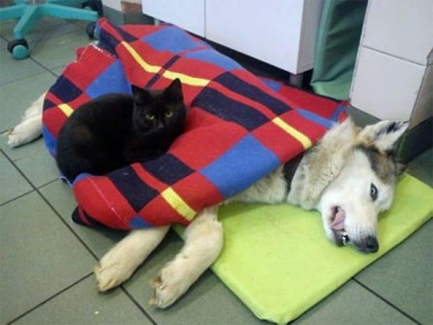 Nurse cat 2