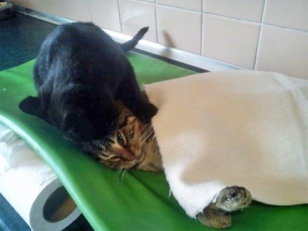 Nurse cat 3