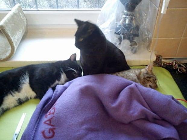Nurse cat 5