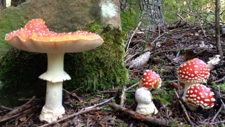 The Naked Label Accidentally Posts Photo Of Poisonous Mushroom Cbc