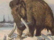 Will woolly mammoths roam the Canadian tundra again? Scientists are working on it.