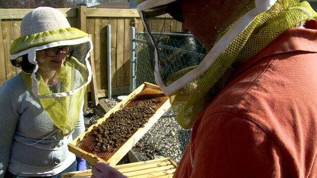 Jocelyn Crocker and Mike Hamilton check the health of their backyard beehive.