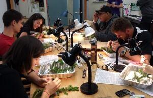 Spruce budworm lab