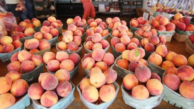 With a warmer climate, fruits like cherries and peaches will be able to be grown at higher latitudes and altitudes in B.C.