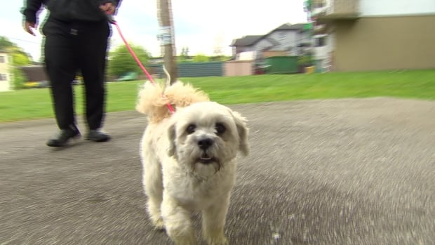 The owner of Moustache is fighting an order from his landlord to provide a stool sample from his dog to prove his innocence in an ongoing investigation to find pet owners who don't clean up.