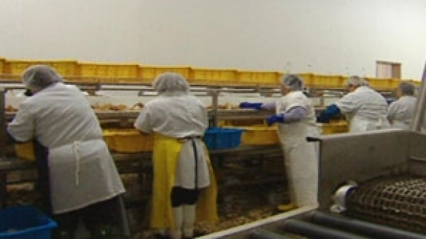 fish plant workers