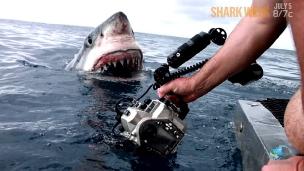 Great white shark's close encounter with film crew captured on video