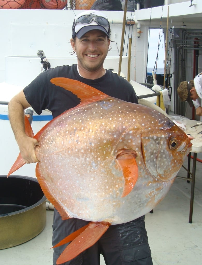 Warm-blooded fish discovered