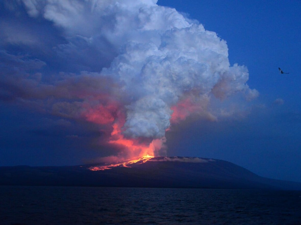 galapagos islands volcano erupts for first time in 33 years cbc news
