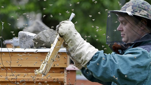 Czech beekeper Roman Linhart checks a honeycomb from a thermo-solar hive, which is designed to keep temperatures high and ward off mites, which are also blamed for devastating bee populations.