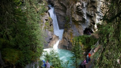 Unofficial trail in secret cave area of Johnston Canyon closed by Parks Canada to protect unique birds