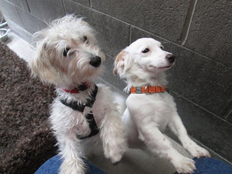 Waterloo Humane Society Dogs