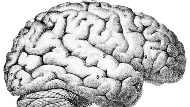 human brain structure inspires artificial intelligence, Human Body