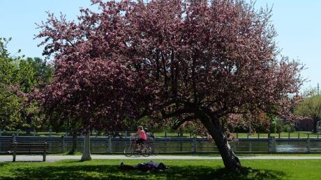 It's a sunny holiday Monday in Ottawa-Gatineau | CBC