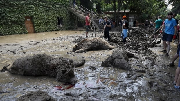 Georgia flooding All missing lions tigers found dead in Tbilisi