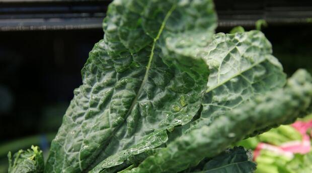 Kale leaf close-up