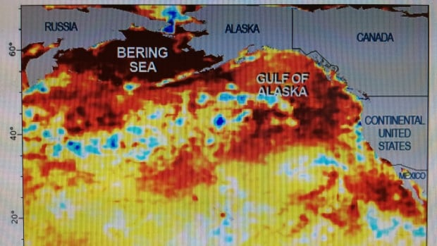 "A University of Victoria oceanographer believes the ""Blob"" will be gone by the end of winter."