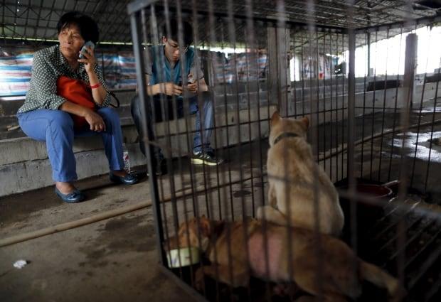CHINA-DOG-MEAT