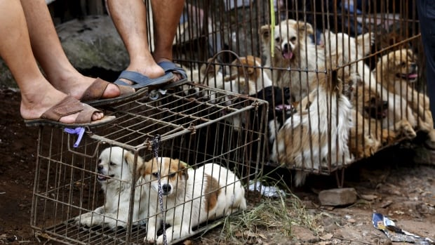 Disturbing images of dogs purported to be killed ahead of Monday's dog meat festival in Yulin, China, are prompting animal lovers to express their outrage online.