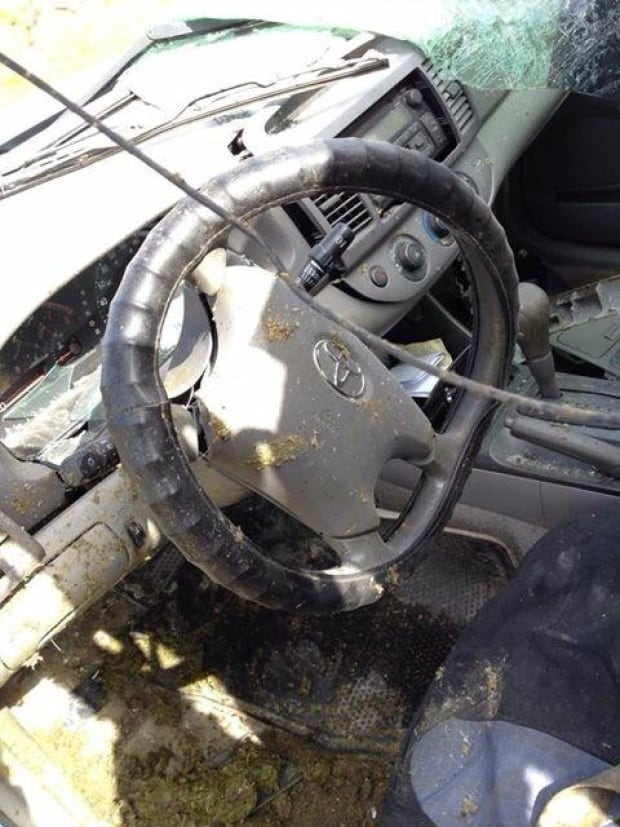 Conche moose accident