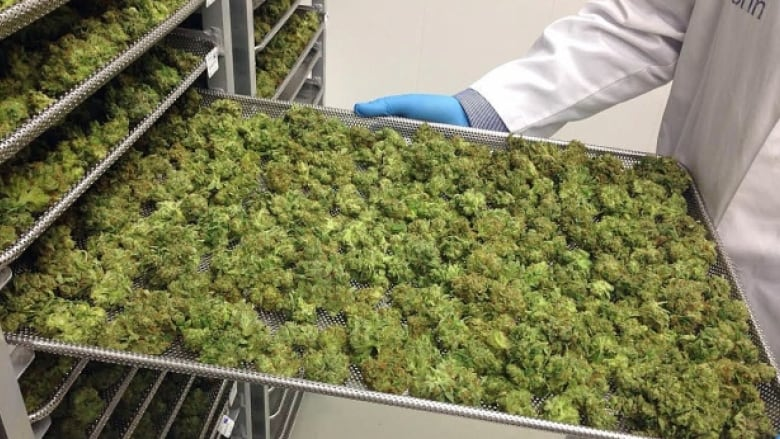 Tilray Passes Canopy Growth To Become World S Most Valuable Pot Company Cbc News