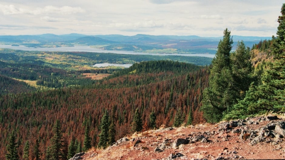 Pine-beetle damage forest near Mt. Fraser in British Columbia