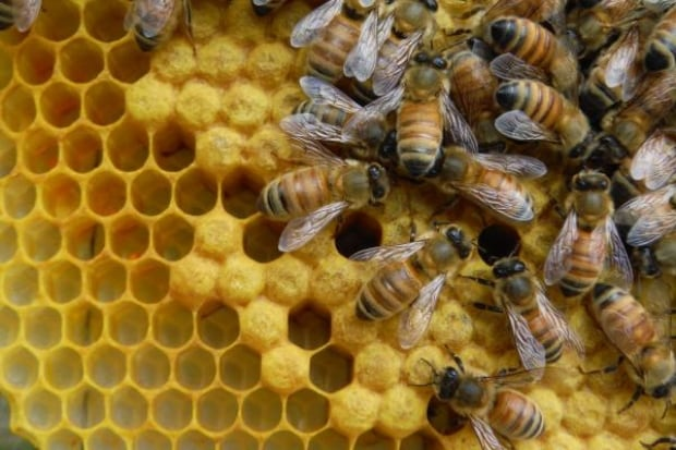 10 Acres bees