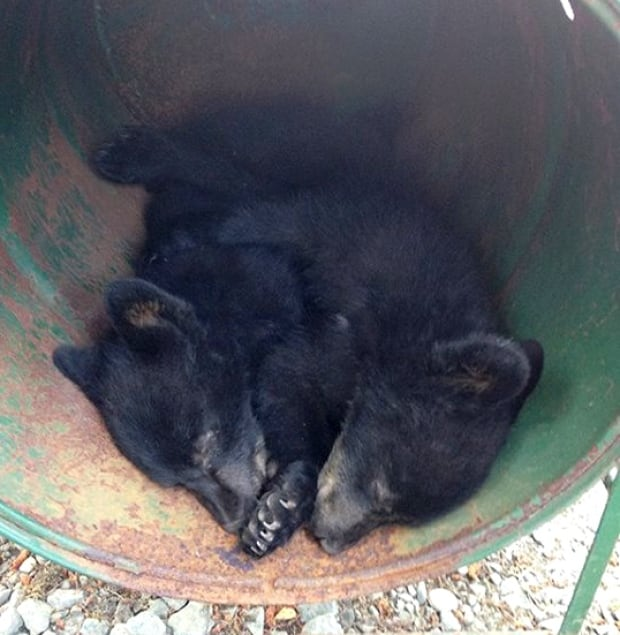 Two cubs