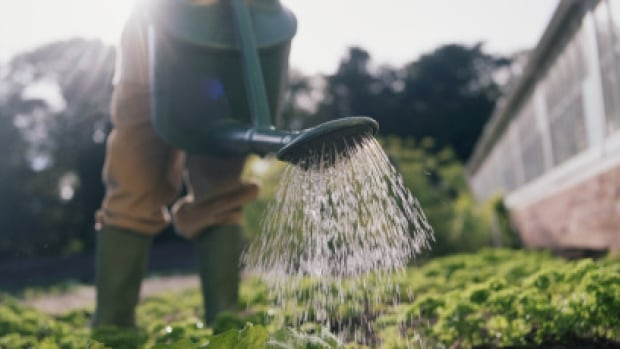 Residents of the Sunshine Coast will be banned from using tap water in their gardens, even from a watering can.