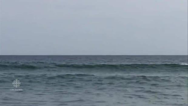 Possible shark freaks out surfers