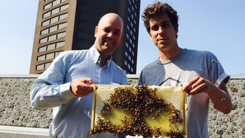CBC installs beehives on roofs of Toronto and Montreal broadcasting ...