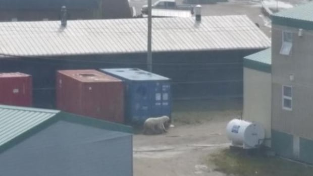 This polar bear sparked a social media frenzy July 16 when it briefly wandered through Iqaluit, then wandered away on the sea ice.