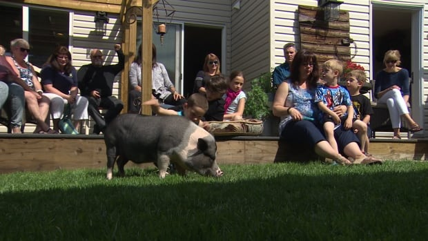 The get-together was the first -- and possibly last -- time Eli's supporters got to meet the pig in person.