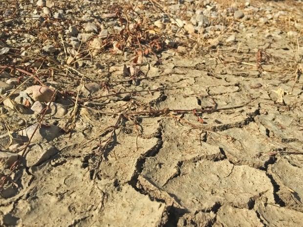 drought leduc alberta