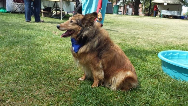 Foster City Dog Park