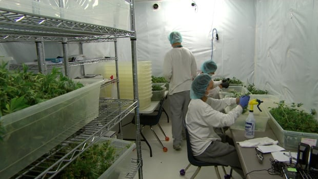 Employees work in a drying room at Delta 9, a medical marijuana growing facility in Winnipeg.