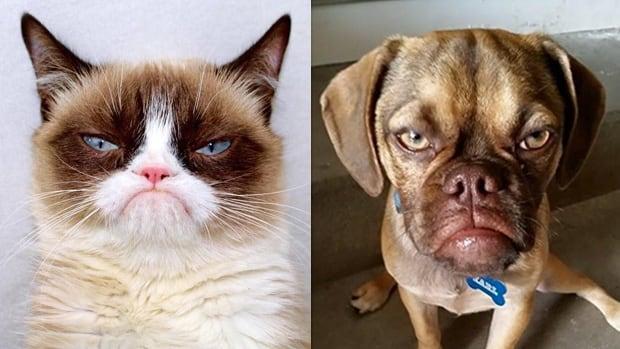 Grumpy cat and Grumpy pup